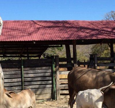 Farm for sale cañas guanacaste costa rica