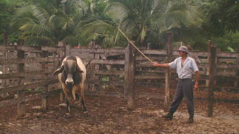 506 Hectare 1250 Acre Operating Cattle Farm Lake Arenal