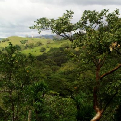 Lake Arenal Cattle Farm Costa Rica Real Estate