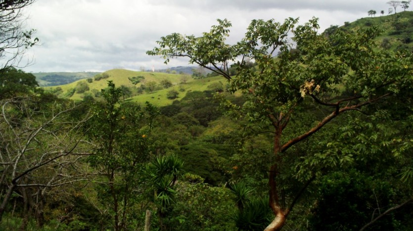 Lake Arenal Cattle Farm Costa Rica Real Estate