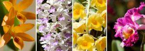 atenas costa rica orchid botanical garden