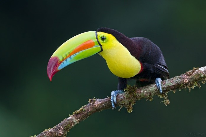 jaco costa rica real estate wildlife