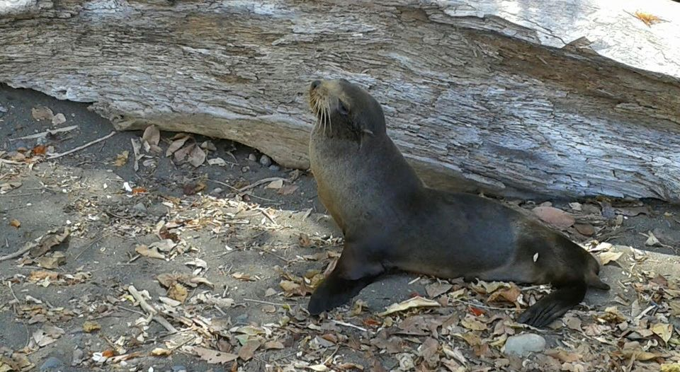 sea lions in jaco