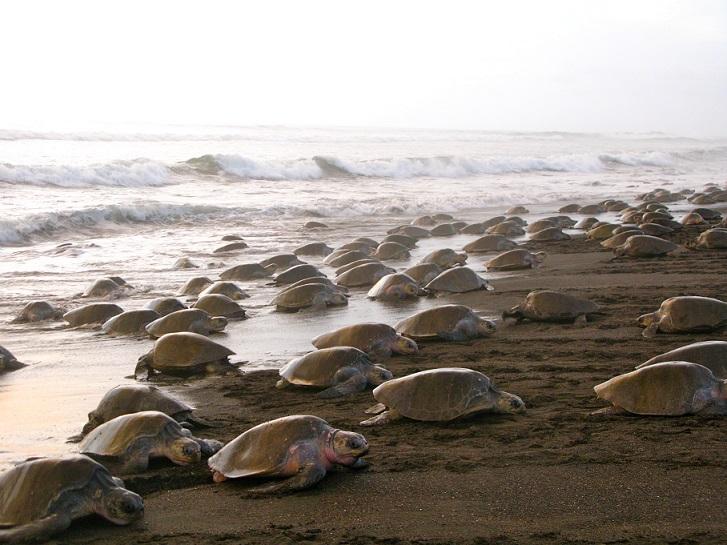 turtles costa rica bucket list