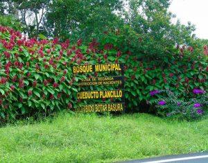 3atenas municipal forest 2