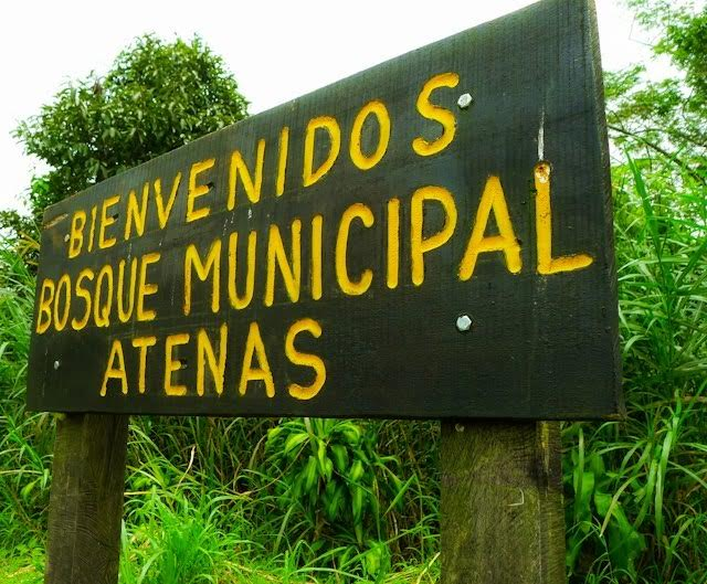 atenas municipal forest 1