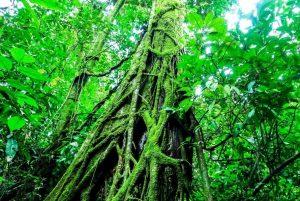 atenas municipal forest 2