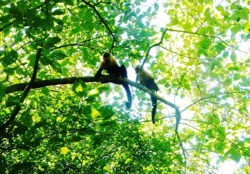 atenas municipal forest 5